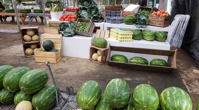 Georgia Roots Urban Farm Opens in South Fulton